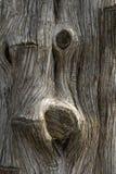树干 免版税库存图片