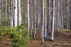树干 免版税图库摄影