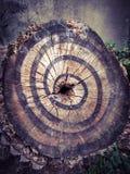 绘画树干 免版税图库摄影
