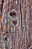 树干 图库摄影