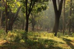 树庭院在卡本公园在班格洛印度 免版税图库摄影