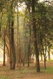 树庭院在卡本公园在班格洛印度 免版税库存图片