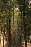 树庭院在卡本公园在班格洛印度 库存照片