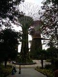 树庭院 免版税库存照片