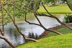树庭院 免版税图库摄影