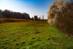 树开花在领域的早期的春天 库存图片
