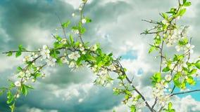 树开花并且退色,定期流逝 股票录像