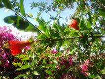 树开花自然春天庭院 库存照片