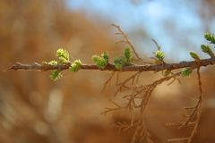 树开花 免版税图库摄影
