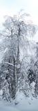 树形式skazachno涂灰泥与雪 库存图片