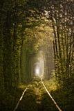 树形成的爱自然隧道 图库摄影