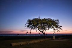 树微明月亮 库存图片