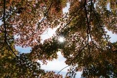 树或植物有绿色肢体叶子的从底视图 免版税图库摄影