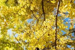 树或植物有绿色肢体叶子的从底视图 库存照片