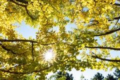 树或植物有绿色肢体叶子的从底视图 库存图片