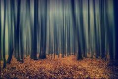 树抽象行动迷离在森林里 库存照片