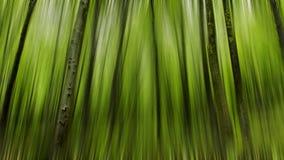 树抽象行动迷离在春天的一个绿色森林里, 库存图片