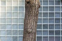 树抽象玻璃纹理背景分部求Architectu的立方 免版税库存图片