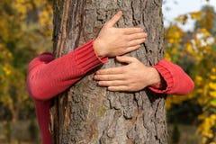 树拥抱 库存照片