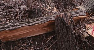树损坏的lof  股票视频