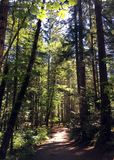 树排行了道路在Rathtrevor海滩, Parksville, BC 库存图片