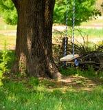 树摇摆 库存图片