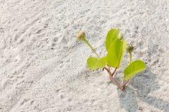 树断裂通过沙子 库存图片