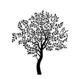 树新的黑色 图库摄影