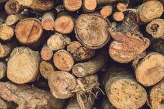 树日志特写镜头本质上,堆木日志准备好在冬天在森林里,木柴作为一可再造能源来源waitin 免版税图库摄影