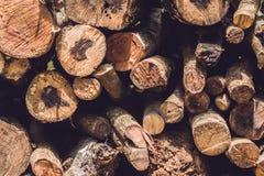 树日志特写镜头本质上,堆木日志准备好在冬天在森林里,木柴作为一可再造能源来源waitin 免版税库存照片