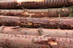 树日志背景水平地被堆积在彼此顶部 击倒一棵树在森林 cesky捷克krumlov中世纪老共和国城镇视图 免版税库存照片