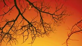 树日落五颜六色的剪影  库存图片