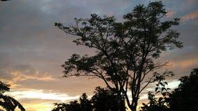 树日落风景 免版税图库摄影