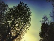 树日落  库存图片