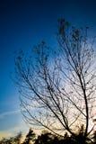树日落 免版税库存图片