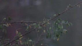 树时间间隔录影在湖边附近的有湖迷离背景  股票录像