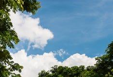 树明亮的天空和上面  免版税库存图片