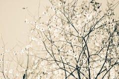树春天 免版税图库摄影