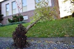 树是下来在房子前面 免版税图库摄影