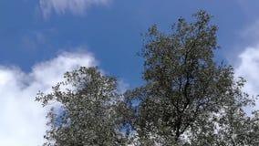 树是分支只来自在有些高度地面的一根木质的树干 影视素材