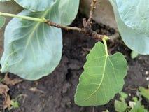 树是发芽和生长在质量土壤 免版税库存照片