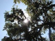 树是生活 免版税库存照片