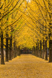 树是秋天 免版税图库摄影