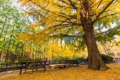 树是秋天 库存照片