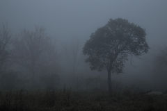 树是雾 库存照片