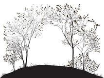 树曲拱  图库摄影