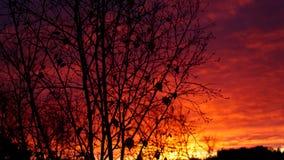 树有万圣夜背景 库存照片