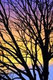 树有五颜六色的背景 库存图片