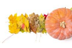 树有些叶子和在白色背景的大南瓜 免版税库存图片