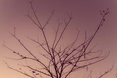 树有分支在背景葡萄酒 图库摄影